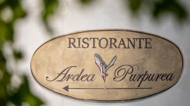 Ardea Purpurea
